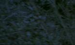 Screen Shot 2018-03-06 at 10.32.34 PM